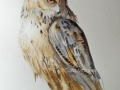 Bubo_bubo_watercolor
