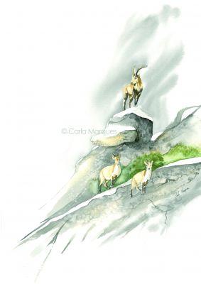 Cabra montes